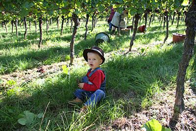 Große Zufriedenheit über die Weinlese 2011