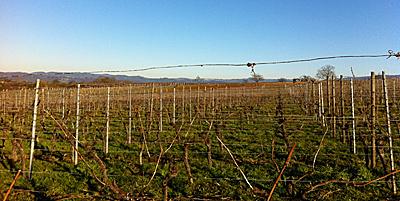 Januar: Rebschnitt in den Weinbergen