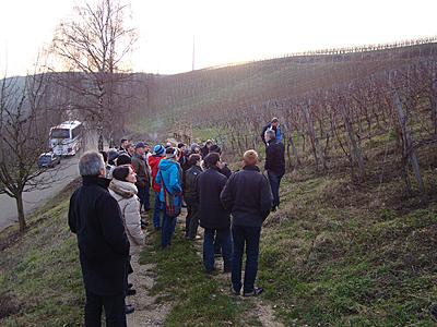 Einführungskurs biologischer Weinbau