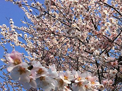 Blüten am Kaiserstuhl