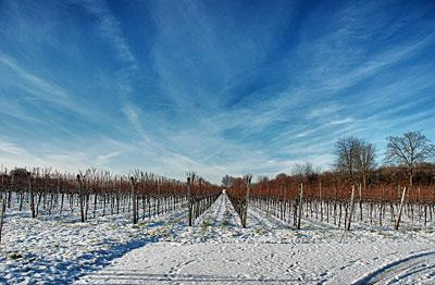 Weinberge mit Schnee