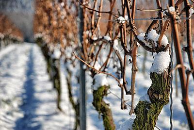 Der Winter hält Südbaden weiterhin fest im Griff