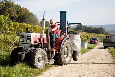 Herbstimpressionen aus dem Weingut Kaufmann